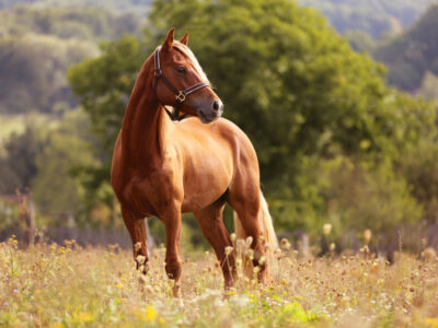 Equine Heat Stress: 4 Tips to Beat the Summer Heat