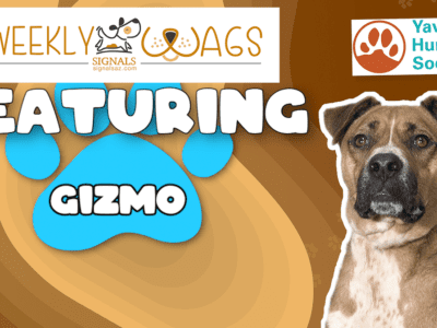 Weekly Wags: Gizmo Is Up For Adoption!