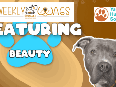 Weekly Wags: Beauty Is Up For Adoption!