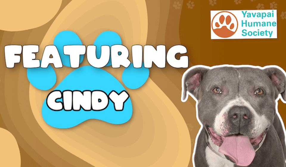 Weekly Wags: Cindy Is Up For Adoption!