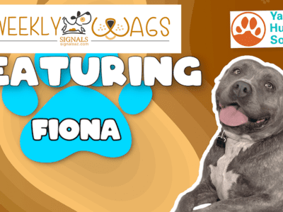 Weekly Wags: Fiona Is Up For Adoption!