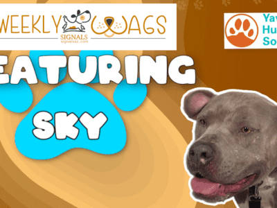 Weekly Wags: Sky Is Up For Adoption!