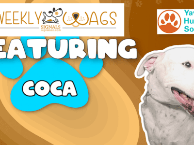 Weekly Wags: Coca Is Up For Adoption!