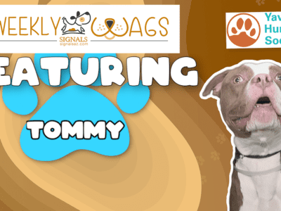 Weekly Wags: Tommy Is Up For Adoption!