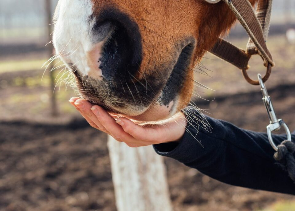Using Nutrition to Manage Horses with Gastric Ulcers signals az