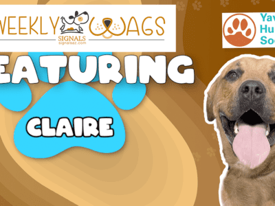 Weekly Wags: Claire Is Up For Adoption!