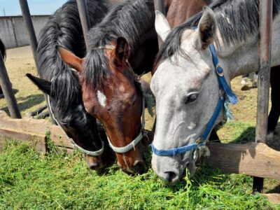 Changing Seasons Means Changing Diets for Horses signals az